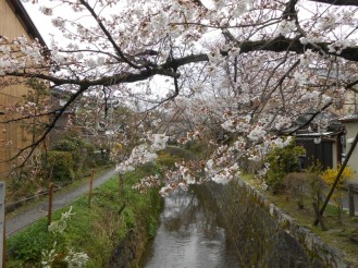 Cherryblossom_Kyoto_05