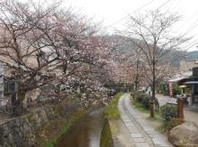 Cherryblossom_Kyoto_07