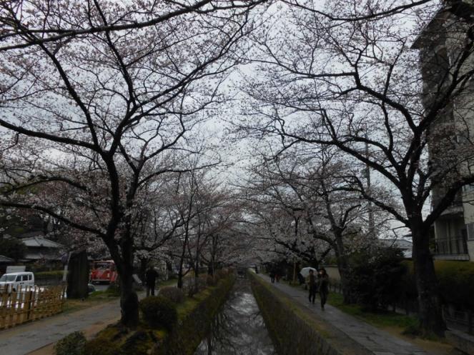 Cherryblossom_Kyoto_09