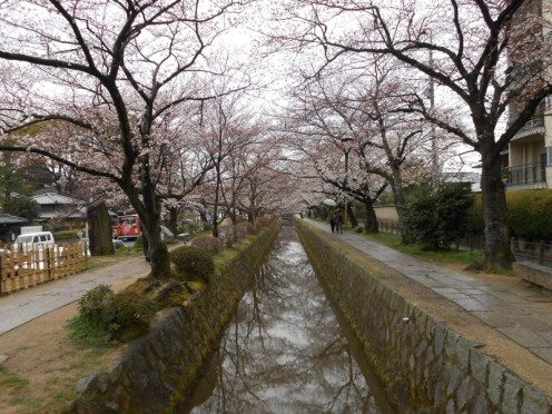 Cherryblossom_Kyoto_10
