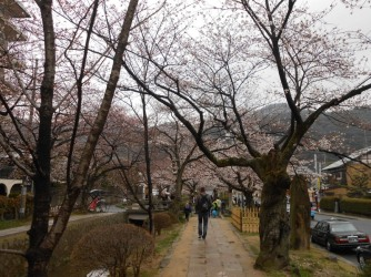 Cherryblossom_Kyoto_11