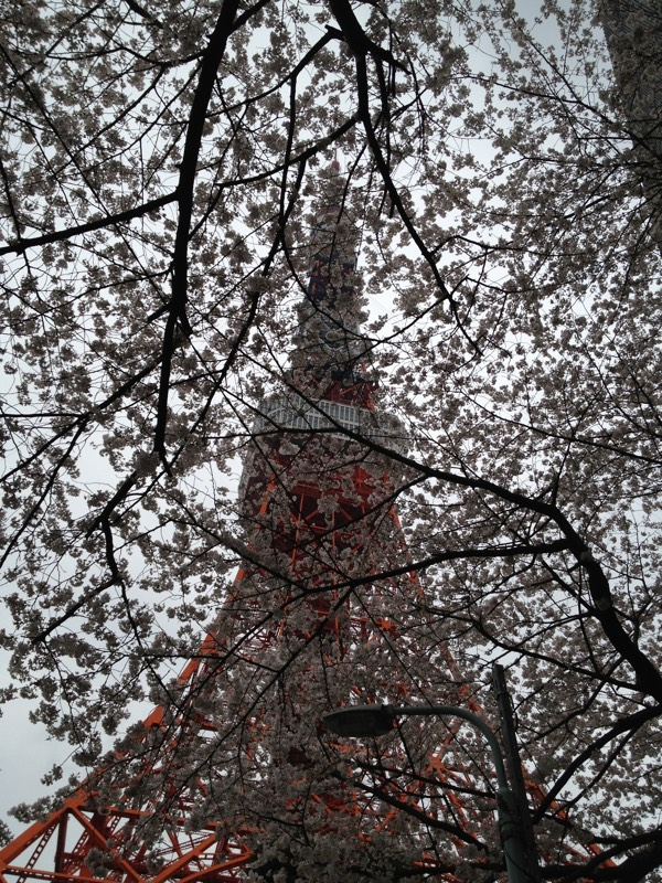 Cherryblossom_Tokyo_01