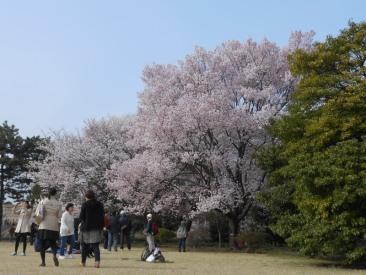 Cherryblossom_Tokyo_03