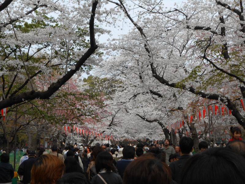 Cherryblossom_Tokyo_07