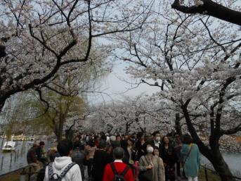 Cherryblossom_Tokyo_08