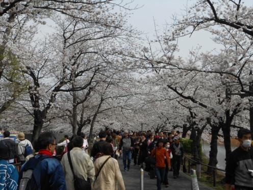 Cherryblossom_Tokyo_09