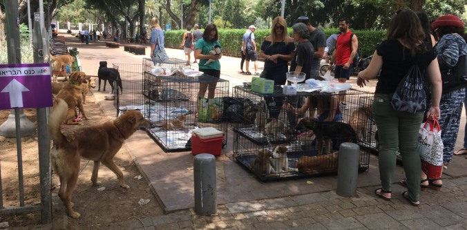 TelAviv_dogs_park