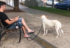 TelAviv_dogs_Rotschild