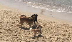 TelAviv_dogs_sea