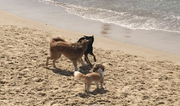 TelAviv_dogs_sea