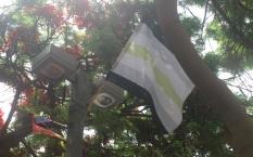 TelAviv_flag_agender
