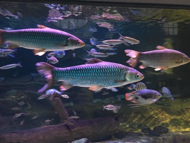 AntwerpZoo_fish