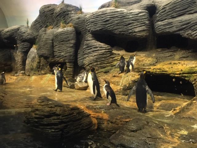 AntwerpZoo_penguin