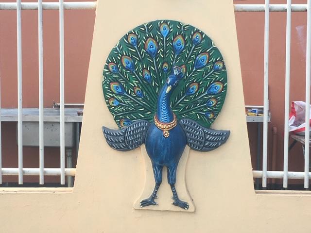 4_Nadi_peacock